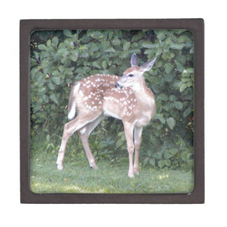jewelry box with photo of young deer