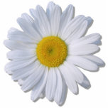 "Jewelry - Pin - New Daisy Statuette<br><div class=""desc"">There are so many stories about the daisy. In literature, Goethe immortalized the daisy when Marguerite needed to know if Faust loved her as she plucked the daisy petals and said, &quot;He loves me. He loves me not.&quot; The daisy received its scientific name, Bellis, from mythology. It is said that...</div>"