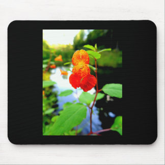 Jewelweed Flower Close-Up Mouse Pad