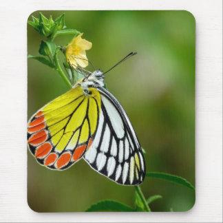 Jezebel (Delias Eucharis) Butterfly Mouse Pad