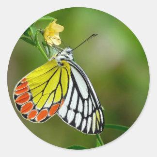 Jezebel (Delias Eucharis) Butterfly Classic Round Sticker