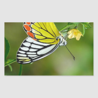 Jezebel (Delias Eucharis) Butterfly Rectangular Sticker