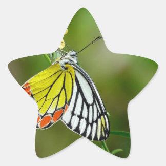 Jezebel (Delias Eucharis) Butterfly Star Sticker