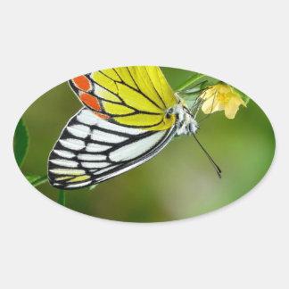 Jezebel (Delias Eucharis) Butterfly Oval Sticker
