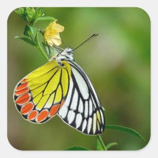 Jezebel (Delias Eucharis) Butterfly Square Sticker