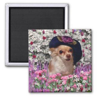 Ji de la ji en el imán de las flores - chihuahua