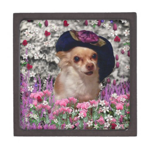 Ji en flores - perrito de la ji de la chihuahua en caja de recuerdo de calidad