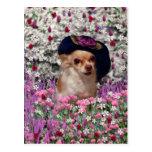 Ji en flores - perrito de la ji de la chihuahua en postal