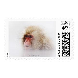 Jigokudani, Nagano Prefecture, Japan Postage Stamp