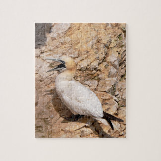 Jigsaw Puzzle: Laughing Gannet Jigsaw Puzzle