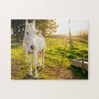 Jigsaw Puzzle of White Arabian Horse
