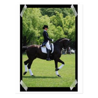 Jinete de la demostración del caballo del Dressage Tarjetas Postales