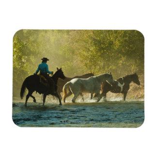 Jinete de lomo de caballo que reúne caballos imanes flexibles
