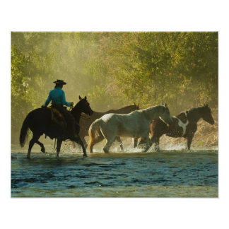 Jinete de lomo de caballo que reúne caballos póster