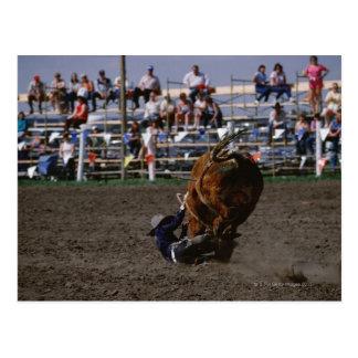 Jinete de rodeo que cae de toro postal