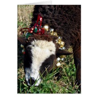 Jingle Bell Lamb Card