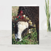 Jingle Bell Lamb Holiday Card