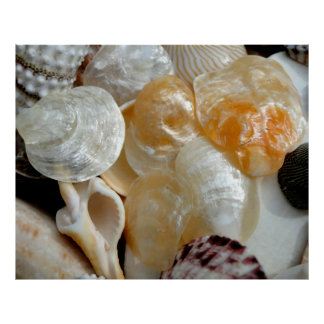 Jingle Shells Large Photography Poster