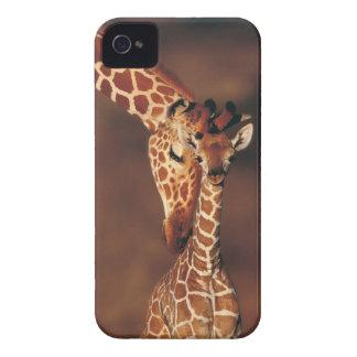 Jirafa adulta con el becerro (camelopardalis del carcasa para iPhone 4