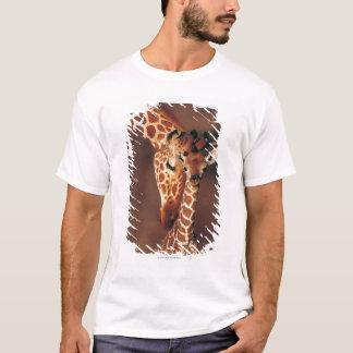 Jirafa adulta con el becerro (camelopardalis del playera
