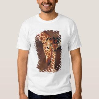 Jirafa adulta con el becerro (camelopardalis del playeras