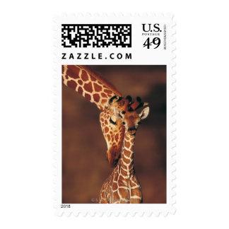 Jirafa adulta con el becerro (camelopardalis del sello postal