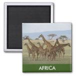jirafa África Imán Cuadrado