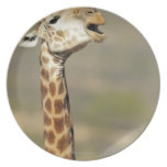 Jirafa africana meridional (camelopardalis del platos de comidas