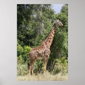 jirafa alta póster