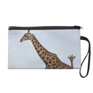 Jirafa (camelopardalis) del Giraffa, Chobe P nacio