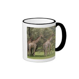 Jirafa camelopardalis del Giraffa Kgalagadi 2 Taza