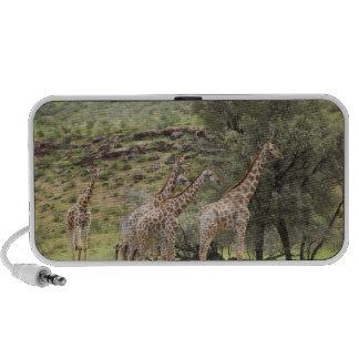 Jirafa, camelopardalis del Giraffa, Kgalagadi 3 Mini Altavoz