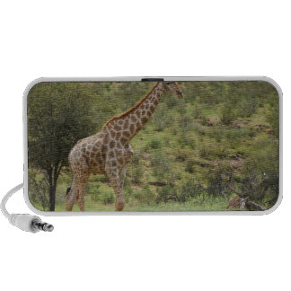 Jirafa, camelopardalis del Giraffa, Kgalagadi iPhone Altavoz