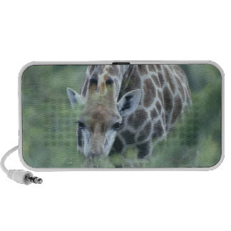 Jirafa (camelopardalis del Giraffa) que alimenta e Altavoces De Viaje
