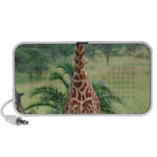 Jirafa, camelopardalis del Giraffa, Tanzania Áfric iPhone Altavoces