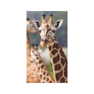Jirafa de África del safari Impresión En Lienzo