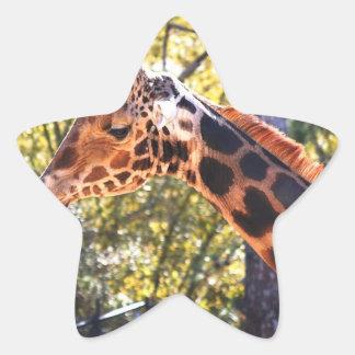 Jirafa de Baringo Pegatina En Forma De Estrella