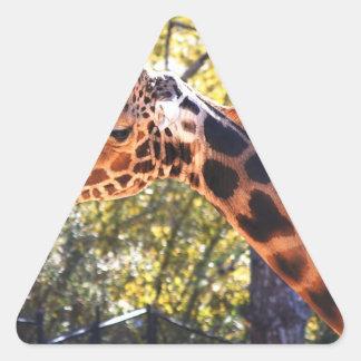 Jirafa de Baringo Pegatina Triangular
