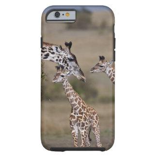 Jirafa de Maasai jirafa Tippelskirchi según lo
