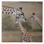 Jirafa de Maasai (jirafa Tippelskirchi) según lo v Azulejo