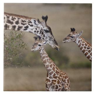 Jirafa de Maasai (jirafa Tippelskirchi) según lo v Azulejo Cuadrado Grande