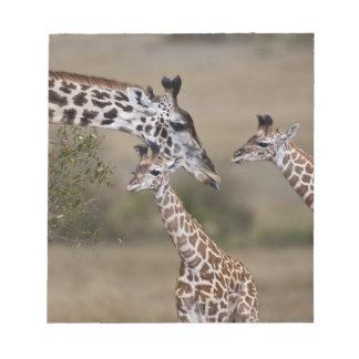 Jirafa de Maasai (jirafa Tippelskirchi) según lo v Blocs