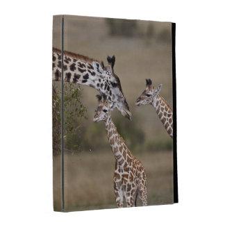 Jirafa de Maasai (jirafa Tippelskirchi) según lo v