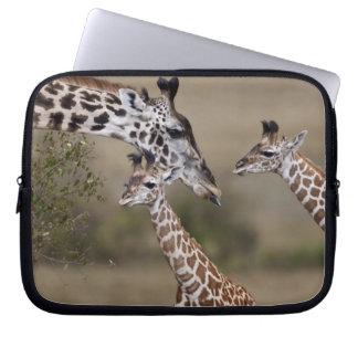 Jirafa de Maasai jirafa Tippelskirchi según lo v Mangas Computadora