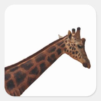 jirafa del baringo pegatina cuadrada