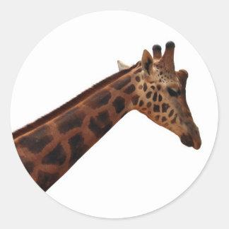 jirafa del baringo pegatina redonda