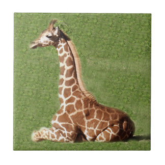 Jirafa del bebé azulejo cuadrado pequeño