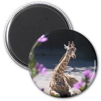 jirafa del bebé imán redondo 5 cm