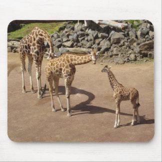 Jirafa del bebé y familia de la jirafa mousepads