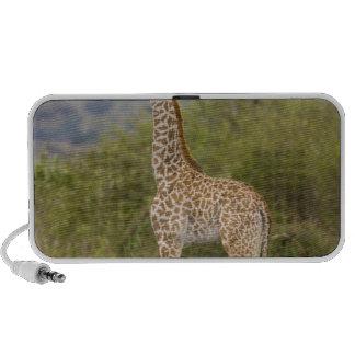 Jirafa del Masai (camelopardalis 2 del Giraffa Mp3 Altavoz